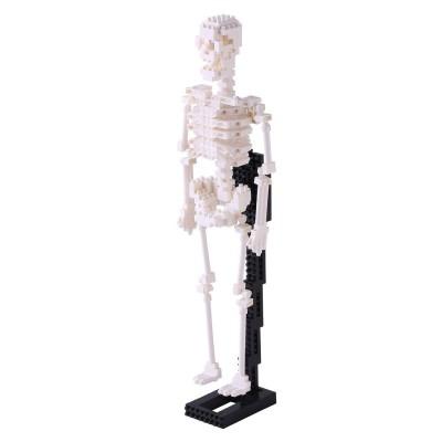 Nanoblock Squelette humain - 490 pièces - Difficulté 5/5